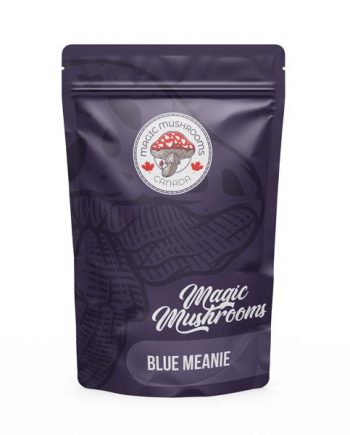 magic mushrooms Blue Meanie canada