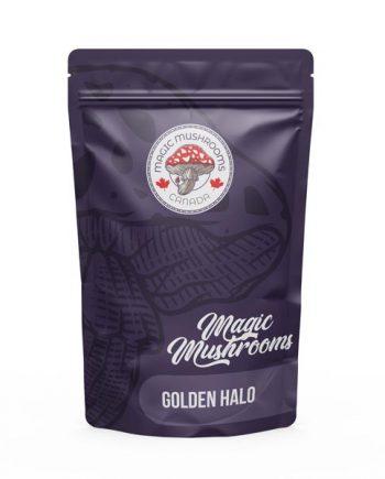 Magic Mushrooms Canada Golden Halo