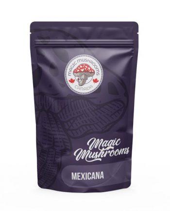 Magic Mushrooms Canada Mexicana
